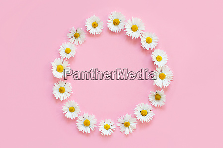 frame made of white daisies on