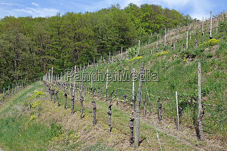 vines at the edge of the