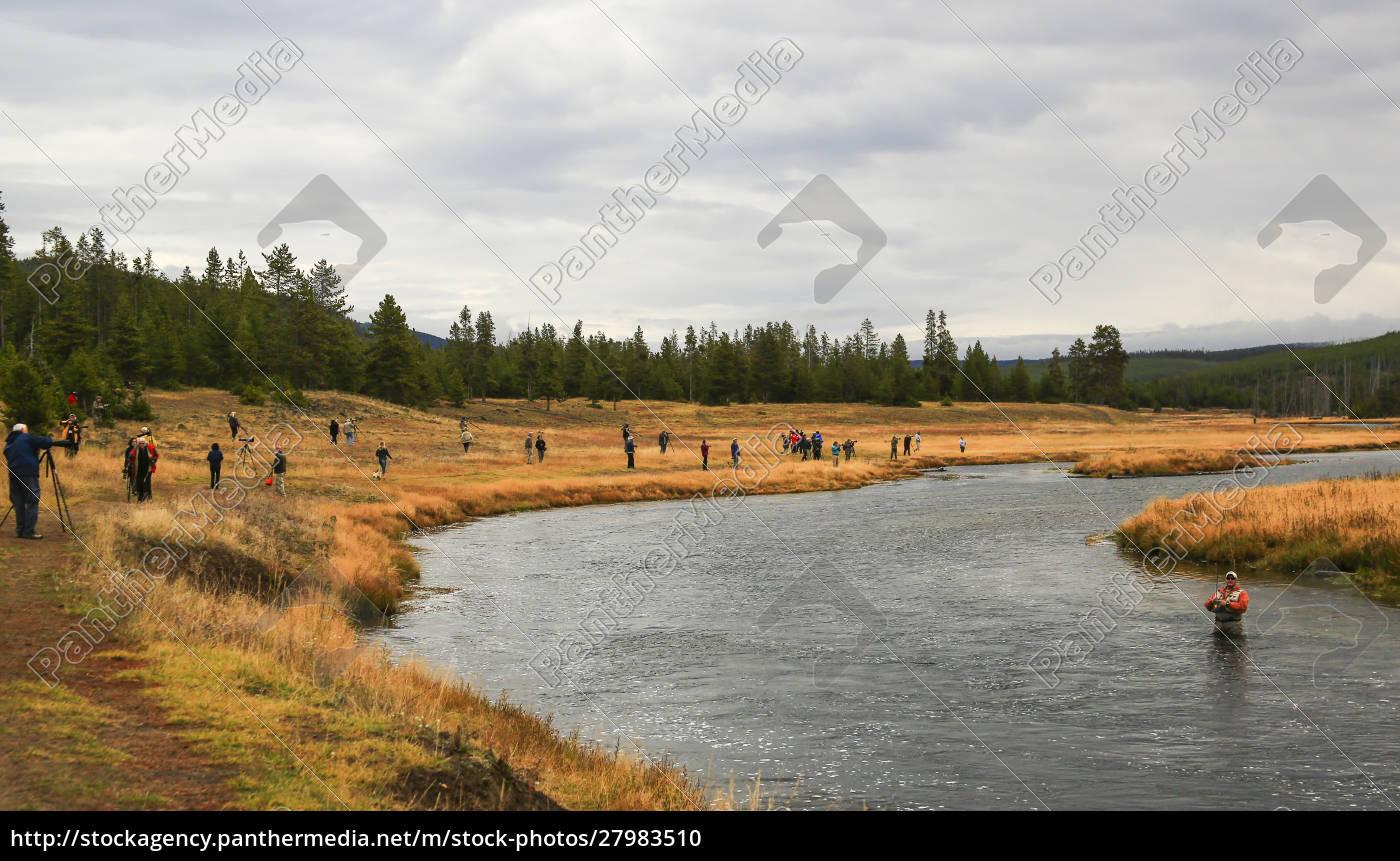usa, , wyoming, , yellowstone, national, park, angler - 27983510