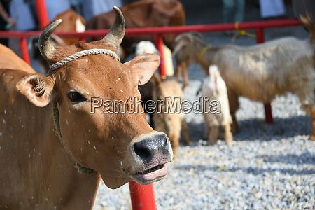 livestock market animal market sars coronavirus