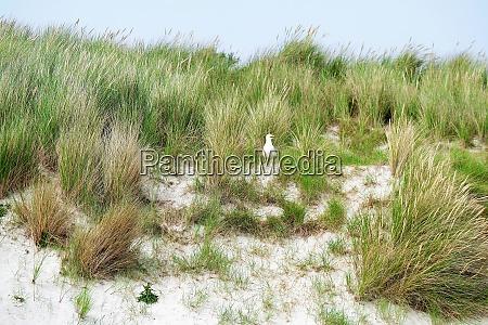 beach dune helgoland duene