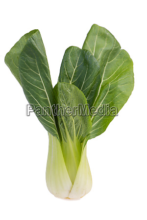 pak choi vegetables isolated on a