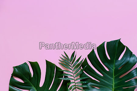 tropical background with monstera leaves on