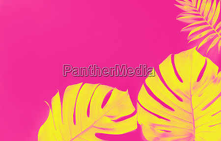 tropical background with yellow monstera leaves