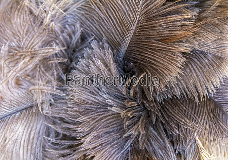 fluffy feather background