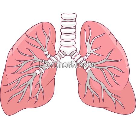 human lung illustration