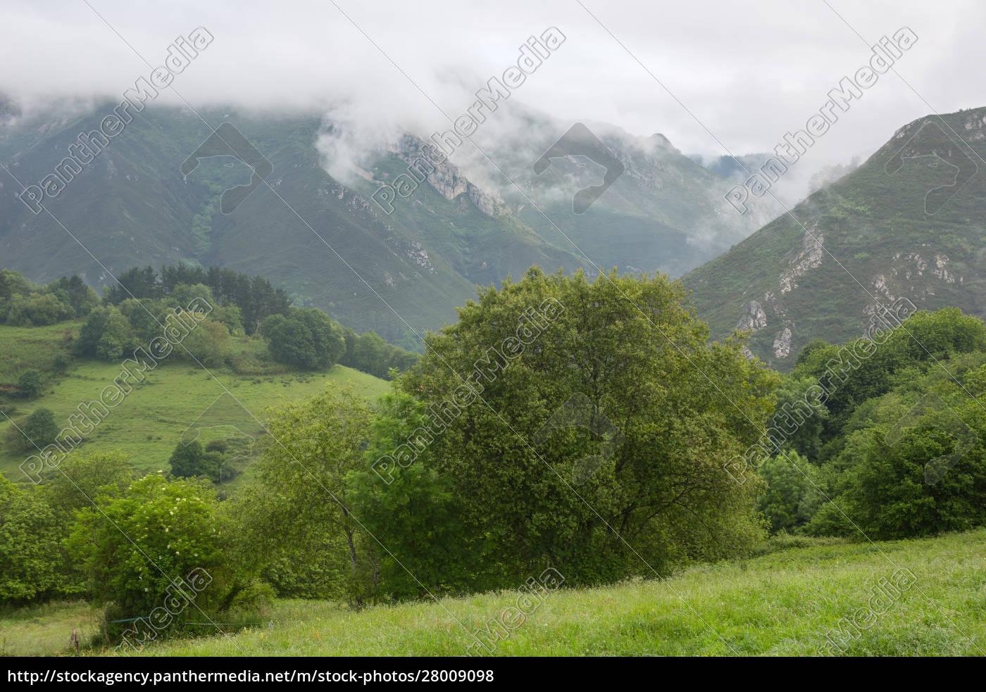 picos, de, europa - 28009098