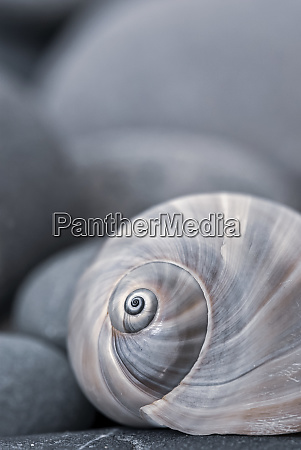 still, life, with, snail, shell, and - 28009634