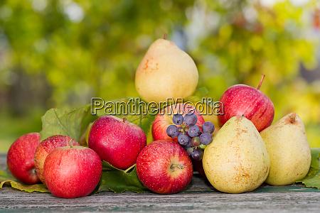 fruits outdoor