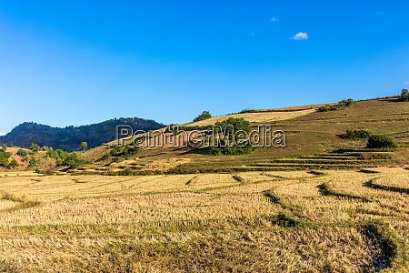 fields landscaped shan state myanmar