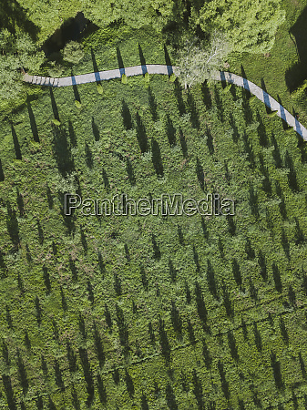 aerial view of grassy land at