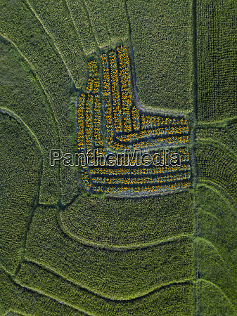 aerial view of green agricultural landscape