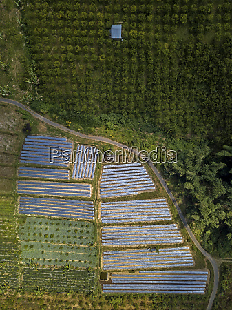 aerial view of farm at bali