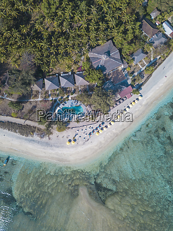 aerial view of trees growing at