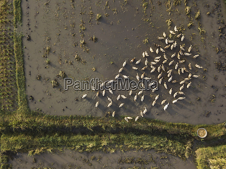 aerial view of ducks on a