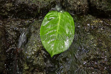 close up og green leaf in