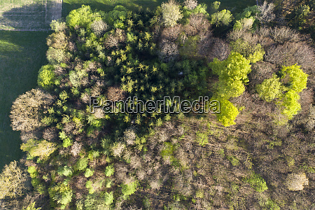 aerial view of trees growing in