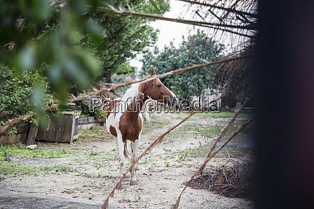 horse in scicli sicily