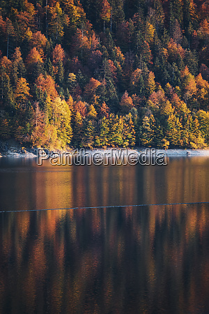sylvenstein lake against coniferous trees in