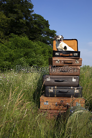 stack of old leather suitcases with