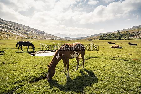 horses on high plateau near lad