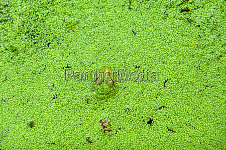 high angle view of frog swimming