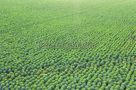 scotland east lothian field of brussels