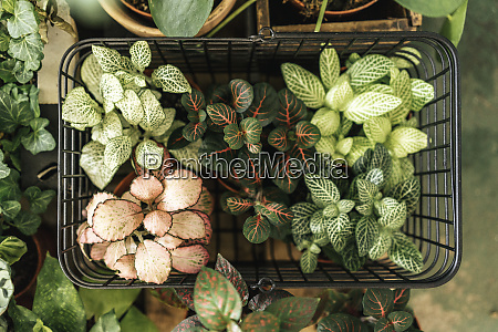 potted plants in a shopping basket