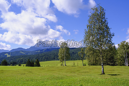 scenic view of humpback meadows against