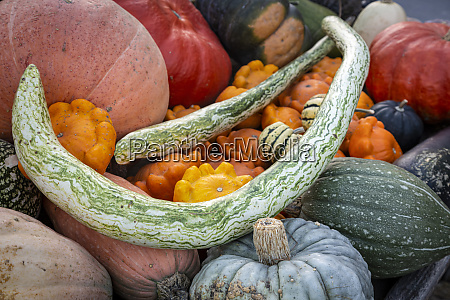 pumpkins at market stall