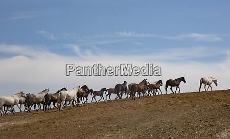 spain jerezdela frontera herd of andalusian
