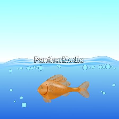 red fish swims on a blurred
