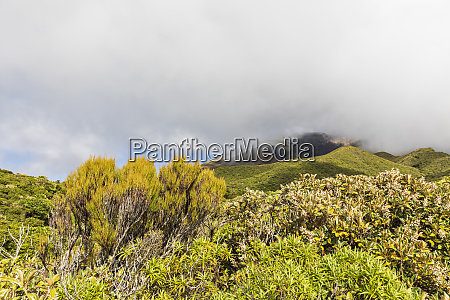 new zealand thick clouds over green