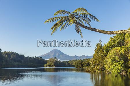 new zealand palm tree growing on