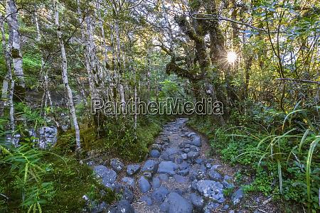 new zealand rocky footpath of taranaki