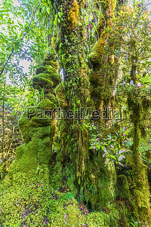 new zealand green moss covered trees