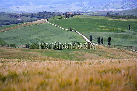 italy tuscany orcia valley pienza fields