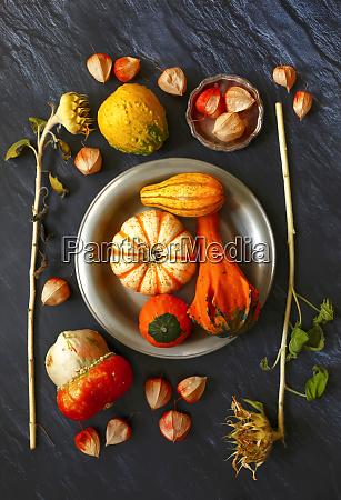 still, life, with, ornamental, pumpkins - 28049171