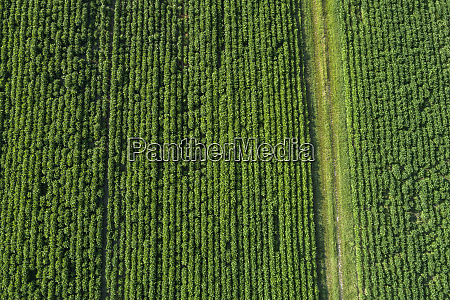 germany bavaria aerial view of crops