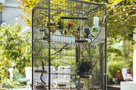 budgies sitting in a cage on