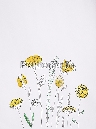 yellow flowers watercolor painting on white