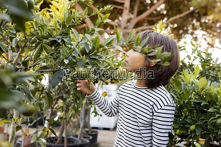 boy looking at citrus in plant