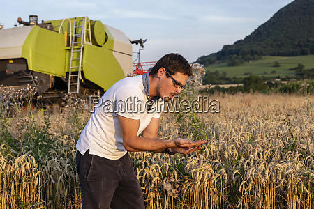 organic farmer checking harvestability