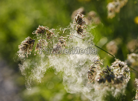 close up of spider web on