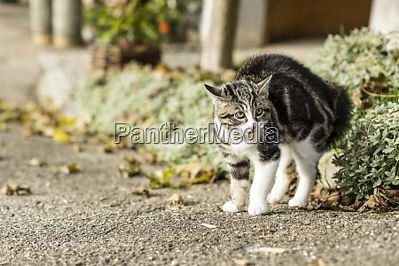 portrait of afraid kitten outdoors