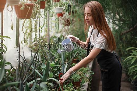 gardener watering plant in greenhouse
