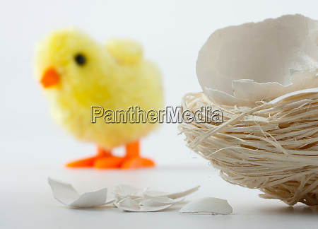 nest with eggshell cracks and toy