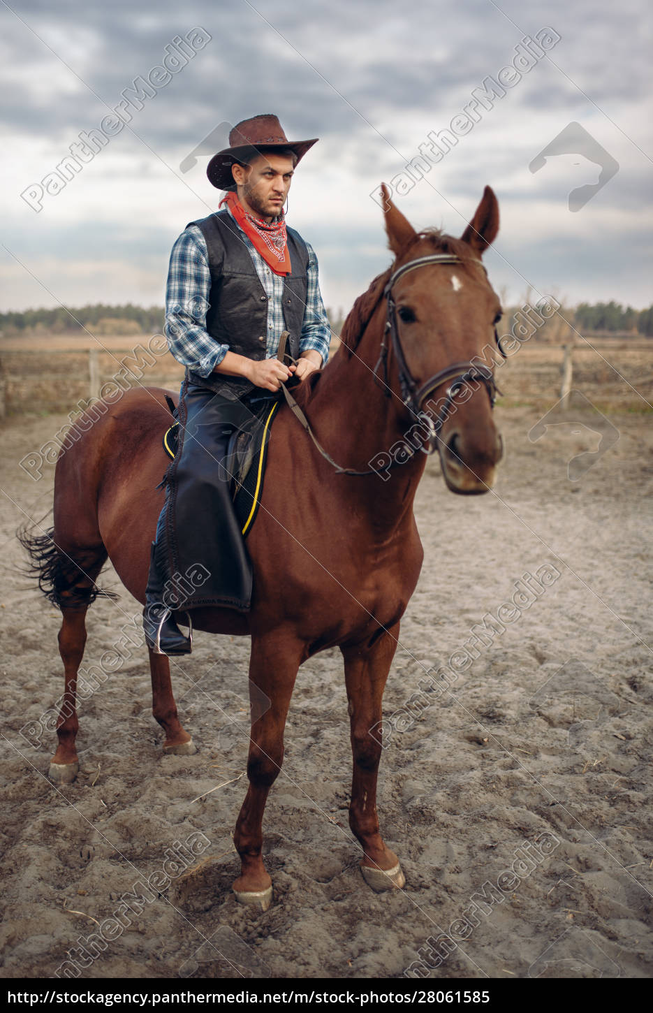 cowboy, in, leather, clothes, riding, a - 28061585
