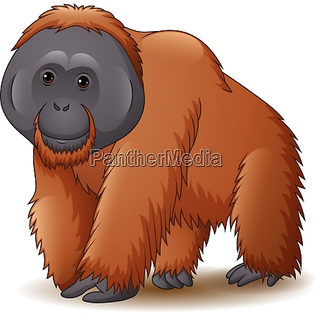 illustration, of, orangutan, isolated, on, white - 28061796