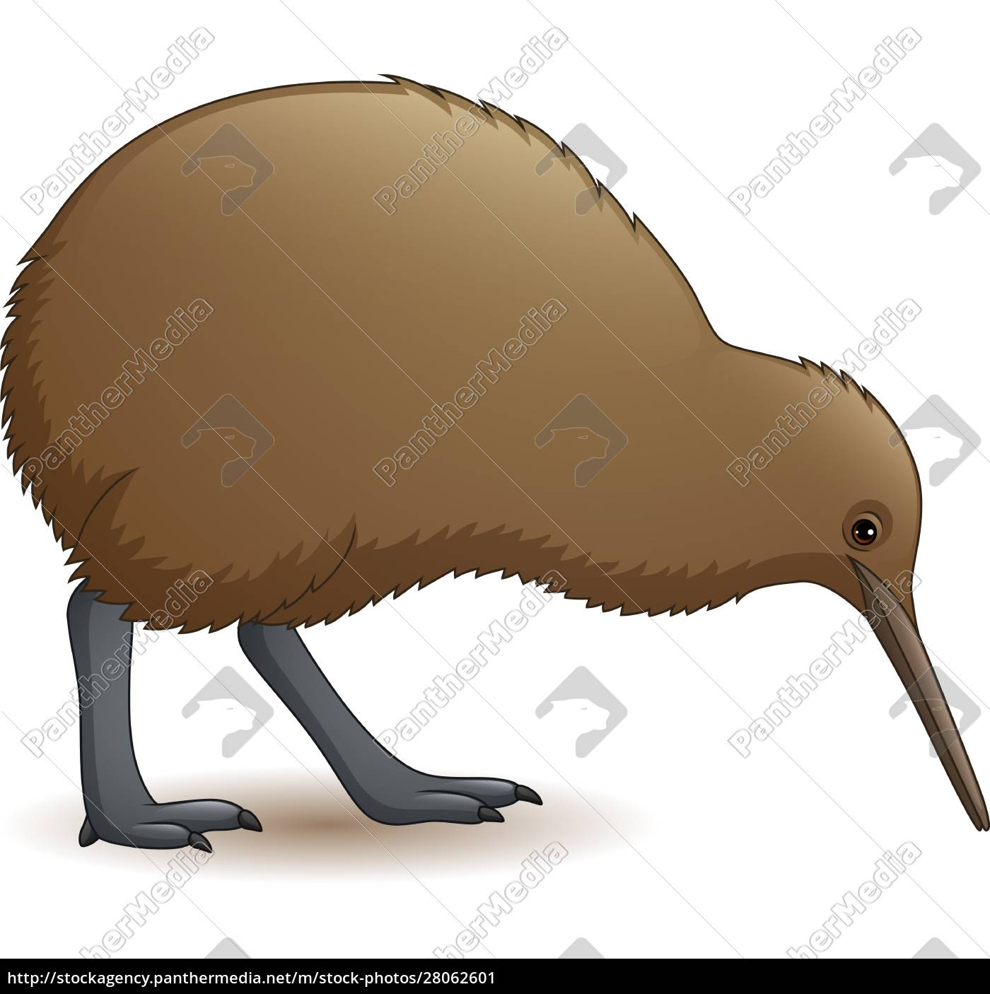 cartoon, funny, kiwi, bird - 28062601